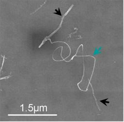 Carbon Nanotube Chemistry: new functionalities