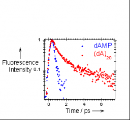 Effect of molecular organisation in DNA oligomers studied by femtosecond fluorescence spectroscopy