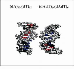 Influence of conformational dynamics on the exciton states of DNA oligomers