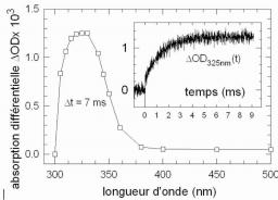 Thymine dimer formation: a time-resolved study