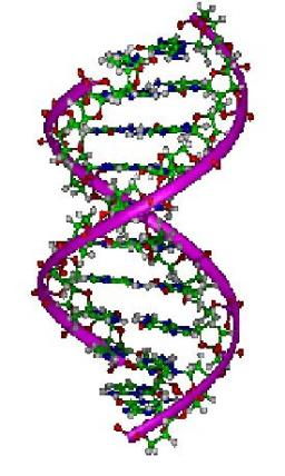 Interaction of UV Radiation with DNA Model Helices