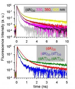 Complexity of excited-state dynamics in DNA