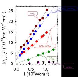 One and two photon ionization of DNA single and double helices studied by laser flash photolysis at 266 nm