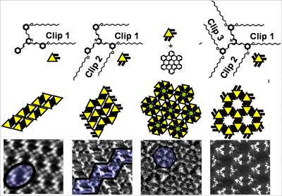 Rational design of building blocks for hierarchical molecular self-assembly