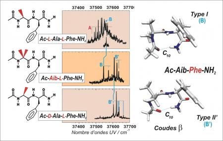 Chirality and folding of peptide chains
