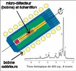 First steps toward micro-imaging: NMR procedure with a 10-fold increase in sensitivity developed by the CEA