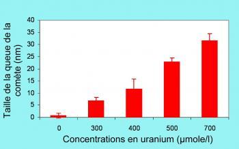 Génotoxicité de l'uranium