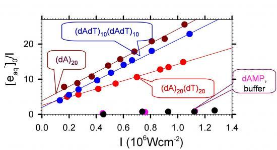 Effets coopératifs dans l\'absorption du rayonnement UV par les bases de l\'ADN