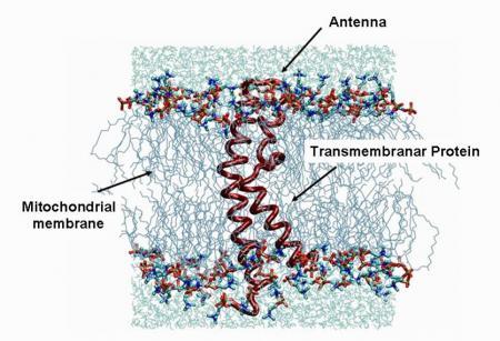 Nouvelles membranes conductrices de protons \'biomimétiques\' pour piles à combustible \'PEMFC\'